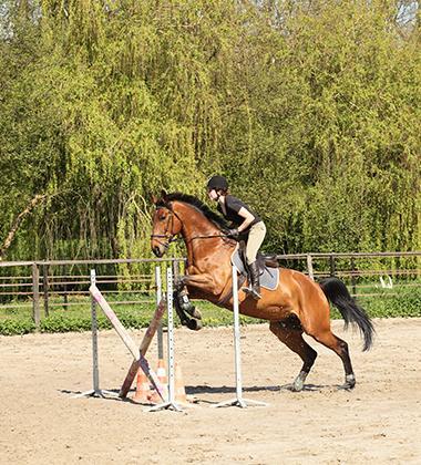 Stages d'équitation Coutances, Nicorps