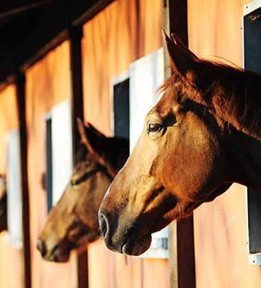 Centre d'équitation Coutances, Nicorps